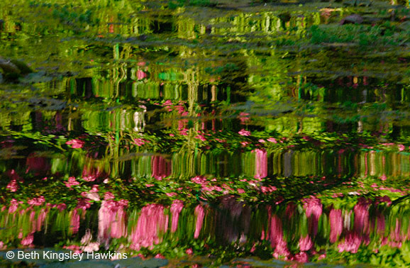 Reflection of red roses at Monet's Pond at Monet's Garden, Giverny France